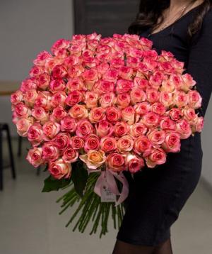 Roses «Jumilia» pink 101  pcs