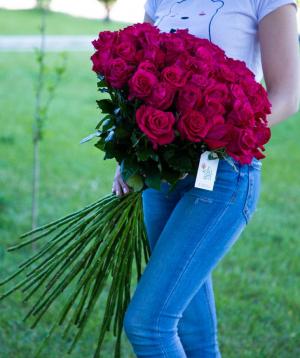 Վարդեր «Fana» մուգ վարդագույն 45 հատ
