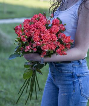 Փնջային վարդեր «Կալիֆորնիա» վարդագույն