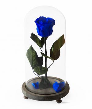 "Rose ""EM Flowers"" eternal dark blue 33 cm"