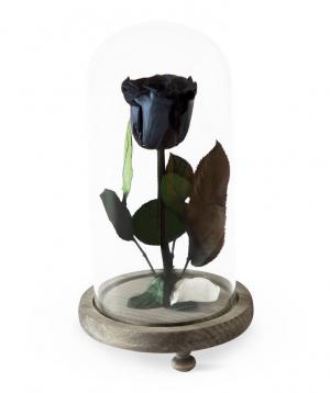 Վարդ «EM Flowers» հավերժական սև 23 սմ