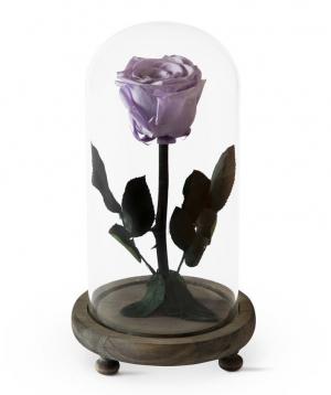 Վարդ «EM Flowers» հավերժական մանուշակագույն 23սմ