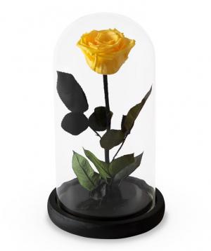 Վարդ «EM Flowers» հավերժական դեղին 27 սմ