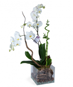 Composition `Orchid Gallery` with orchids and  bamboo of happiness