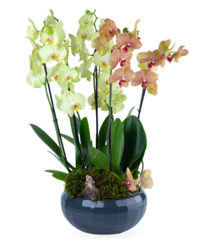 Composition `Orchid Gallery` with orchids №4