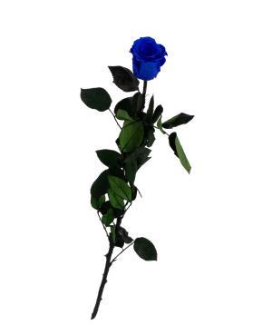 "Rose ""EM Flowers"" eternal blue 50 cm"