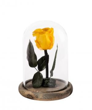Վարդ «EM Flowers» հավերժական 17սմ դեղին