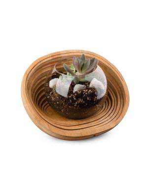 Florarium `Aries` with succulents