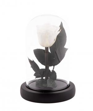Վարդ «EM Flowers» հավերժական սպիտակ 13 սմ կոլբայով