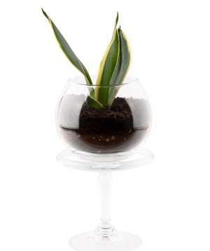 Florarium `Irind` with succulents