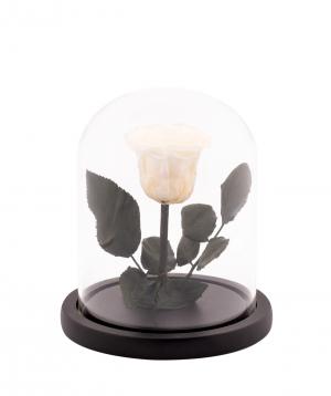 "Rose ""EM Flowers"" eternal white 17 cm in a flask"