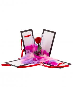 Վարդ «EM Flowers» կարմիր հավերժական տուփով