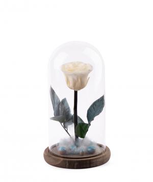Վարդ «EM Flowers» հավերժական Snow