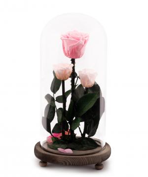 Վարդեր «EM Flowers» հավերժական վարդագույն 28 սմ կոլբայով