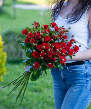 Փնջային վարդեր «Իլինոյս» կարմիր