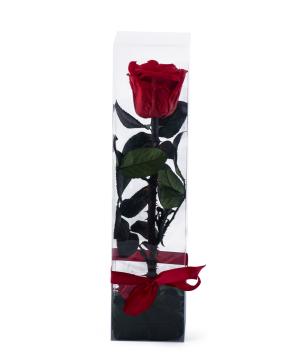Վարդ «EM Flowers» հավերժական 27 սմ տուփով