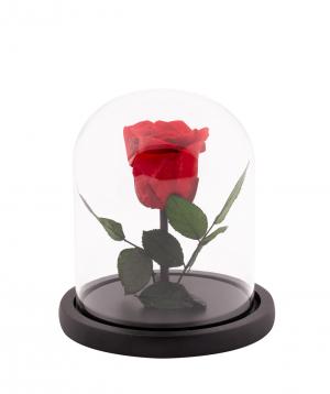 Վարդ «EM Flowers» հավերժական կարմիր 17 սմ կոլբայով