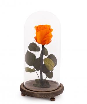 Վարդ «EM Flowers» հավերժական նարնջագույն 28 սմ կոլբայով
