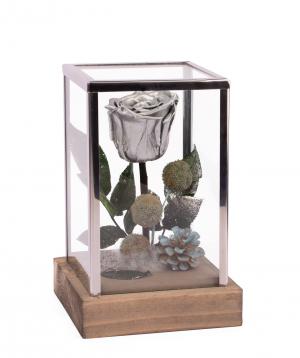 Վարդ «EM Flowers» հավերժական Silver Rose