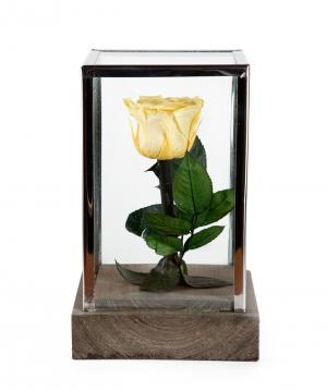 """Rose """"EM Flowers"""" eternal 18 cm"""