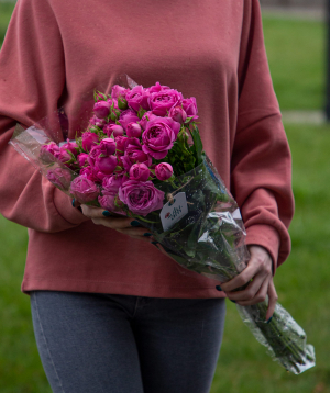 Spray roses «Batesville» purple