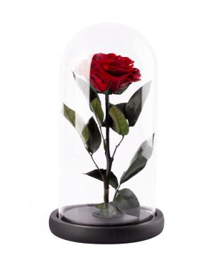 """Rose """"EM Flowers"""" eternal 27 cm"""