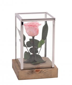 Վարդ «EM Flowers» հավերժական վարդագույն 18 սմ կոլբայով