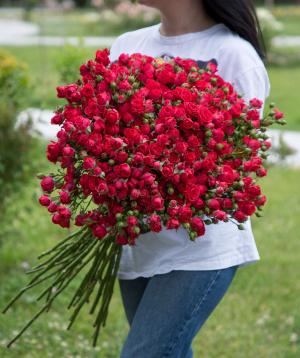 Кустовые розы красные