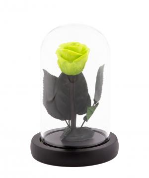 "Rose ""EM Flowers"" eternal green 13 cm in a flask"