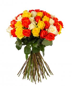 Roses `White Naomi, Penny Lane, Oww` mix 59 pieces