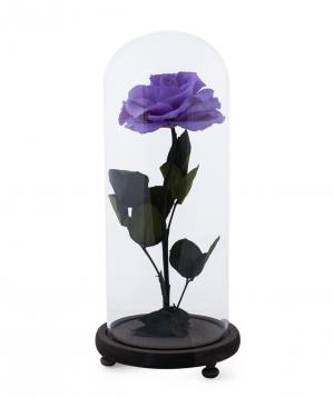 Վարդ «EM Flowers» հավերժական մանուշակագույն 33 սմ