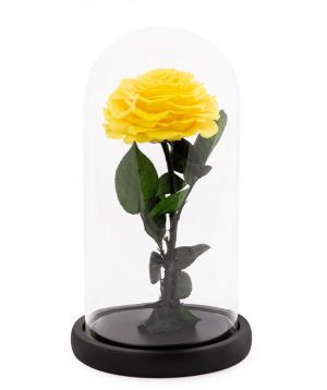 Վարդ «EM Flowers» հավերժական դեղին 27 սմ կոլբայով