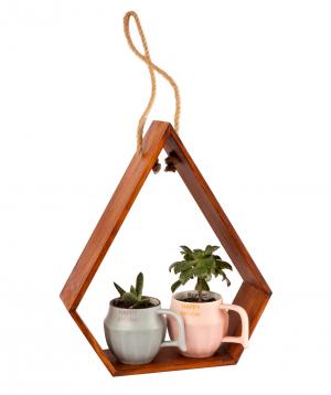 Կոմպոզիցիա «Eco Garden» սուկուլենտներով №1