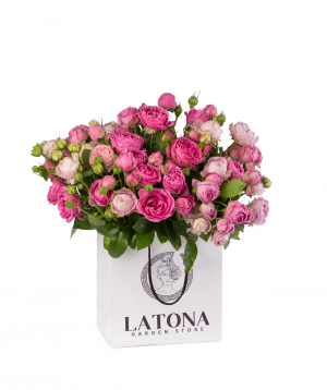 Composition `Dior` with peony roses