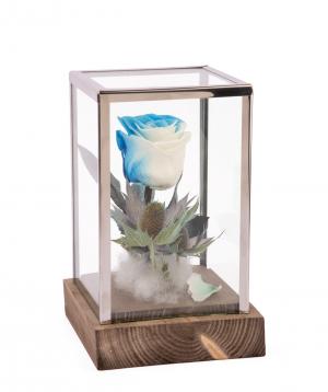 Վարդ «EM Flowers» հավերժական Ձյունե թագուհի