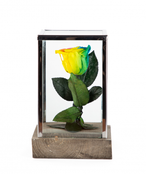 """Rose """"EM Flowers"""" eternal rainbow 18 cm"""