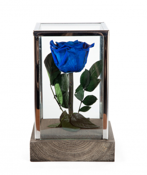 "Rose ""EM Flowers"" eternal blue 18 cm"