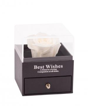 Վարդ «EM Flowers» հավերժական սպիտակ թալիսմանով