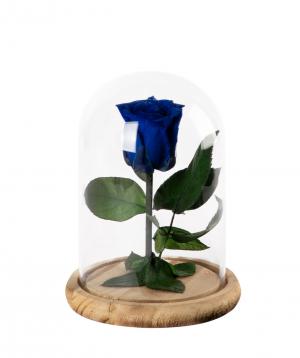 "Rose ""EM Flowers"" eternal 17 cm blue"