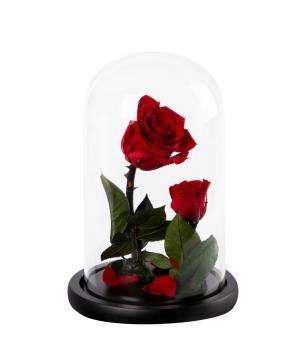 Վարդ «EM Flowers» հավերժական, Գեղեցկուհին և Հրեշը N1