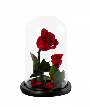 "Rose ""EM Flowers"" eternal, Beauty and the Beast N1"