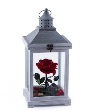 "Rose ""EM Flowers"" eternal 45 cm in a lampshade"