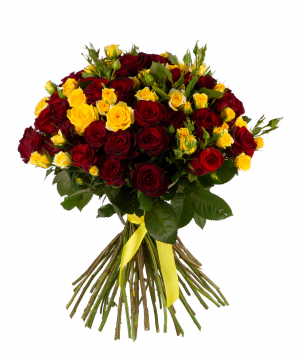 Roses «Gladiator» and yellow bush roses