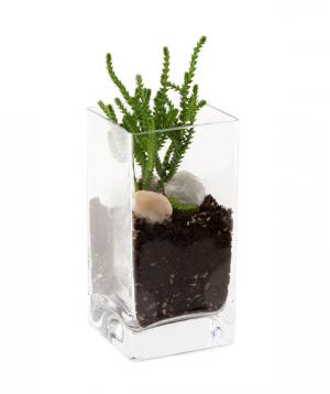 Florarium `Van` with succulents