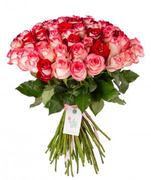 """Roses """"Luxor, Jumilia"""" mix 59 pieces"""