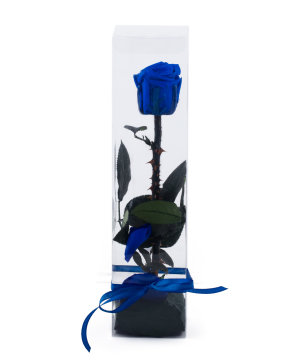 Rose `EM Flowers` eternal blue 27 cm in a box