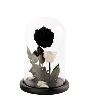 Վարդ «EM Flowers» հավերժական, Գեղեցկուհին և Հրեշը N2