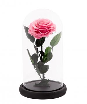 Վարդ «EM Flowers» հավերժական վարդագույն 27 սմ կոլբայով