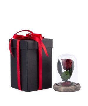 "Rose ""EM Flowers"" eternal 12 cm dark red"