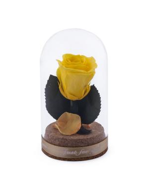 Վարդ «EM Flowers» մինի հավերժական դեղին 10 սմ